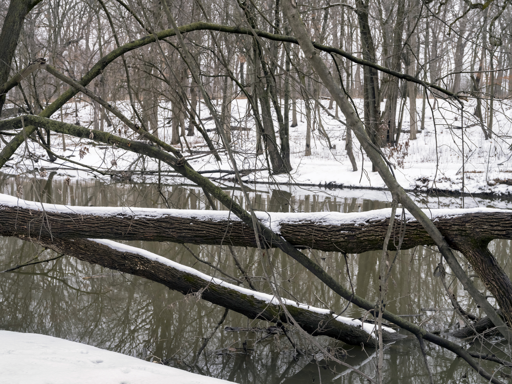 trees have fallen into a river in the woods that are covered in a light blanket of snow, the colors are browns and muted