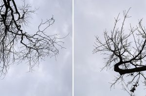 winter tree branches bare of almost all leaves push out from the right lower side of the image