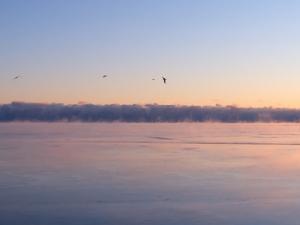 Foggy Lake Michigan Video Still