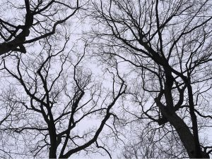 the silhouettes of branches and trunks trace across the sky in black relief in a photo from Lincoln Schatz, the dreaming trees of winter, waiting for spring