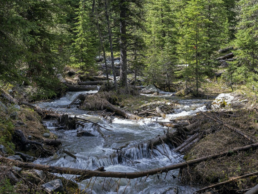 Crail Creek Bee Basin
