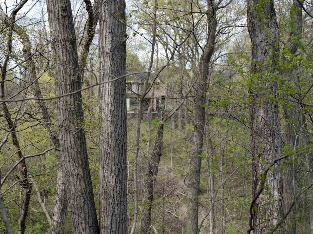 nature and humans push and pull against one another in this photo of a mansion set in trees