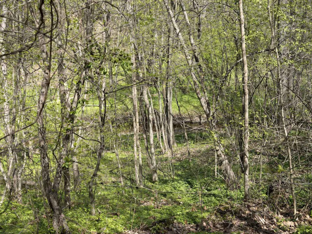 The Woods are bursting with life as a small creek carves its way through the trees that fill this river valley.