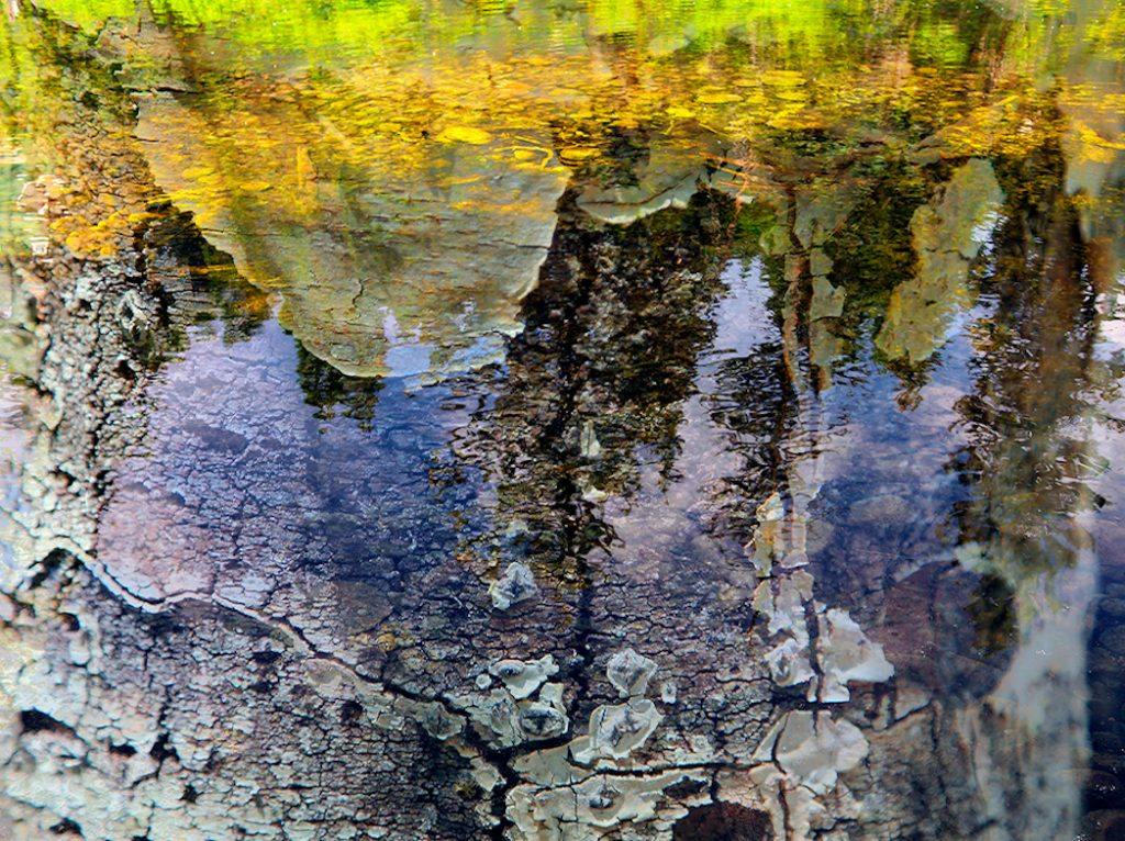 aspen pine trees are reflected in a crystal clear pool of water along a hiking trail in Aspen Colorado