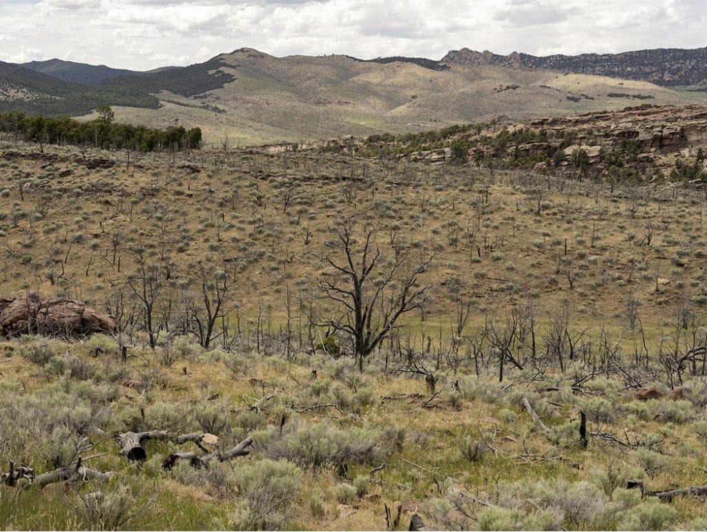 Tough Arid Landscapes