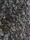 Lichen. Big Sky, Montana